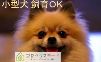 小型犬飼育相談可!